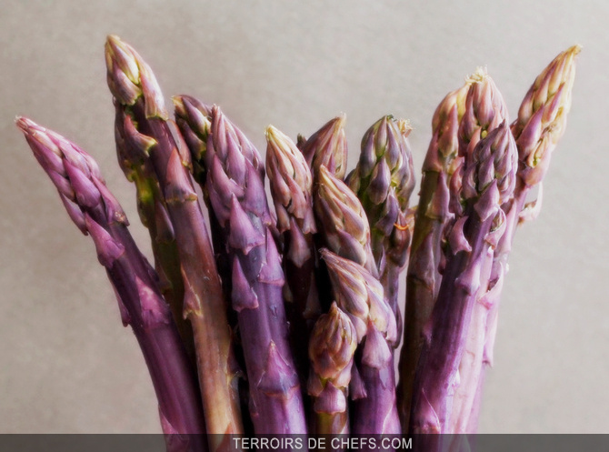 Asperge-violette_zoom